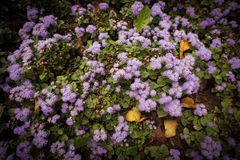 Purple flower background. And leaves Stock Photography