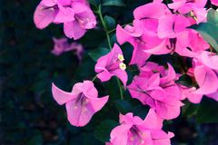 Purple flower background texture, Natural background stock photos
