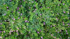 Purple flower background. Very beautiful Royalty Free Stock Photos