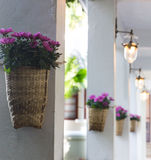 Purple flower in basket on pillar. Purple flower in basket hanging on pillar Stock Photography