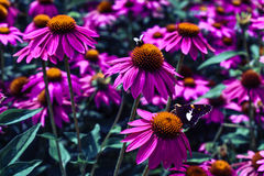 Purple flower with bee and butterfly stock photos