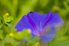 Purple flower with bee Stock Photo