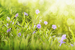 Free Purple Flower Between Green Grass With Sunlight Stock Image - 85660761