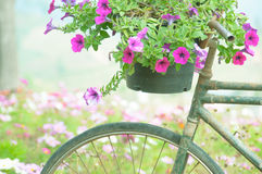 Purple flower on bike Royalty Free Stock Photography