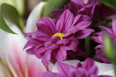 Purple flower in bloom on a bouquet with water drops Royalty Free Stock Image