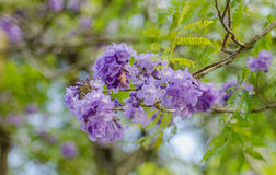 Purple Flower. A purple flower blooming during spring Stock Image