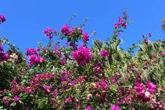 Purple flower on the blue sky stock image