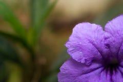 Purple flower on blurred background