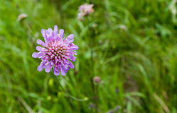 Purple flower. A purple flower with a blurred background stock image