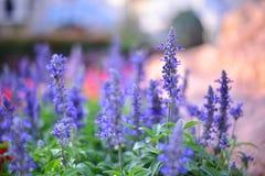 Purple flower on background bokeh. Purple flower on bokeh background in sunset Stock Images