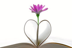 Purple flower and book pages. Forming a heart or leaves, isolated on white Royalty Free Stock Image