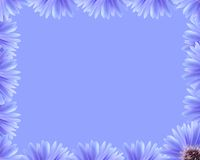 Purple flower border Royalty Free Stock Photos