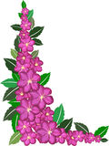 Purple flower border Royalty Free Stock Photos