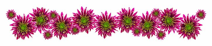 Purple flower border Royalty Free Stock Images