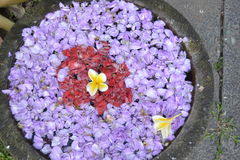 Purple flower. Bowl red yellow water Stock Image