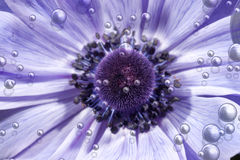 Purple flower with bubbles Royalty Free Stock Photo