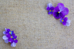 Purple flower on a canvas. Can be used as a background Royalty Free Stock Image