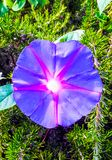 Purple flower with center and pink star stock images