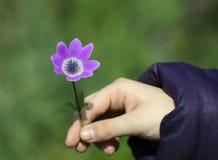 Purple flower Stock Images
