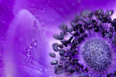 Purple flower close up Stock Photos