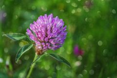 Purple flower over green background Royalty Free Stock Images