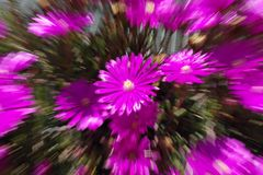 Purple Flower. Composition with zooming effect Royalty Free Stock Image