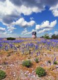 Purple Flower Countryside. Countryside landscape with purple flowers and an old wind mill royalty free stock photography