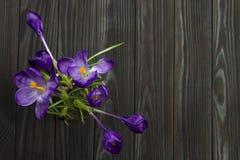 Purple flower Crocus in the pot leaves are green leaves pistil stamen black wooden background Stock Images