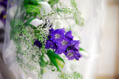 Purple flower. Delicate petals Stock Photography