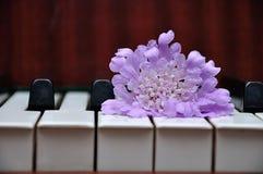 A purple flower displayed on top of piano keys. A single  purple flower displayed on top of piano keys stock photos