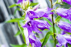 Purple flower in an exotic garden royalty free stock photos