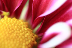 Purple Flower. Extreme close up of the center of a purple flower Stock Photography