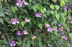 Purple Flower, Flowers Royalty Free Stock Photo