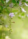 Purple flower . Stock Photos