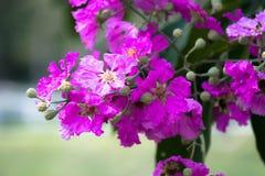 Purple flower. In the garden Stock Photo