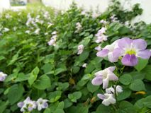 Purple flower in a garden. Purple flower garden nature focus stock images