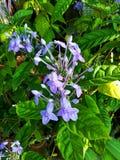 Purple flower in the garden. Purple flower garden small plant green violet royalty free stock photos
