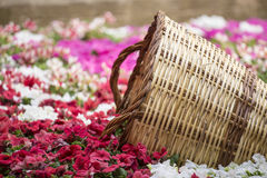Purple flower garden with wood baskets Stock Image