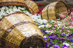Purple flower garden with wood baskets Royalty Free Stock Image