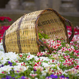 Purple flower garden with wood baskets Royalty Free Stock Photo