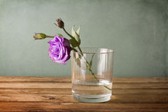 Purple flower in glass of water Royalty Free Stock Photography