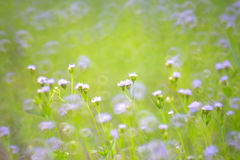 Nature Blur Background Stock Photos 164 155 Images