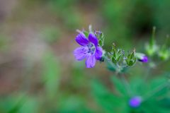 Purple flower. On the grass stock photography