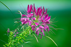 Purple flower on green Stock Photography