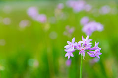 Purple flower with green background. In garden stock images