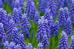 Purple Flower on Green Field Stock Photo