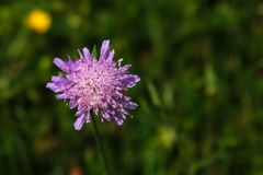 Purple Flower in Green Field stock images