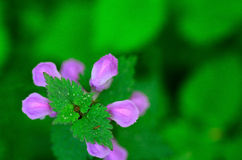 Purple flower and green top Stock Images
