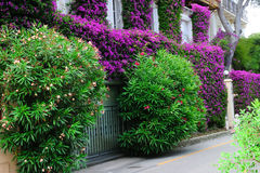 Purple flowers and green trees beside street. Purple flower and green tree beside street in front of a building stock photo