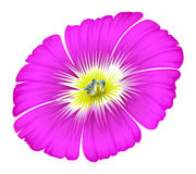 A purple flower Stock Photography